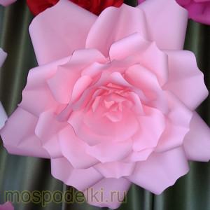 Роза цветная
