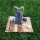 Котик из репейника
