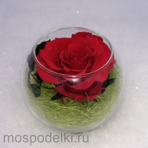 Неувядающая роза
