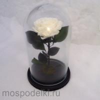 Роза в колбе (белая)